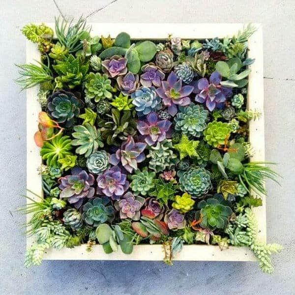 40 Ways to Decorate With Succulents, Even Without a Green Thumb