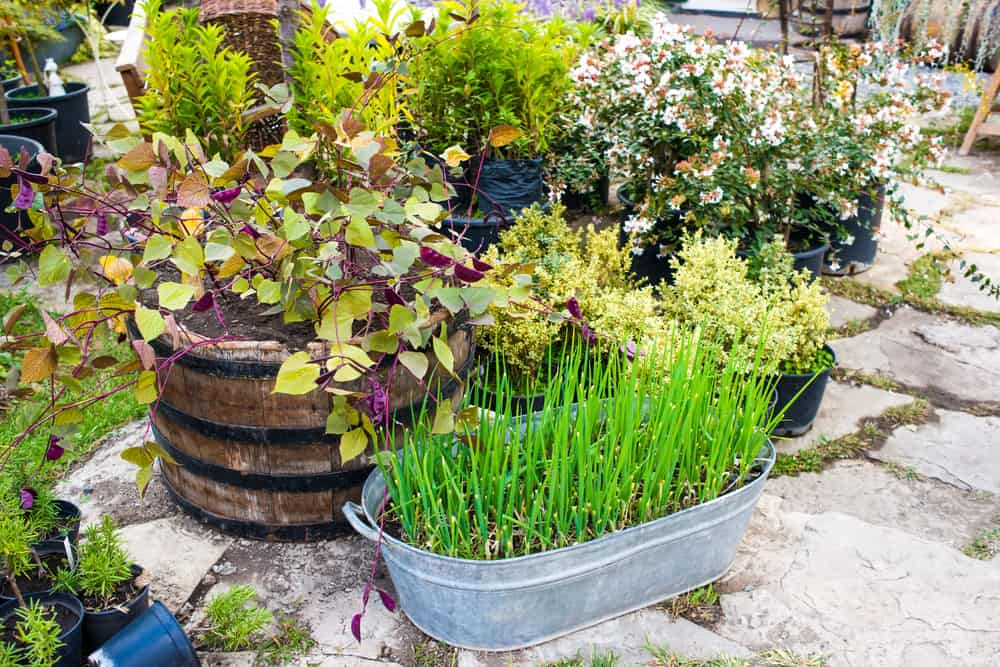 1.Planters for Washtubs