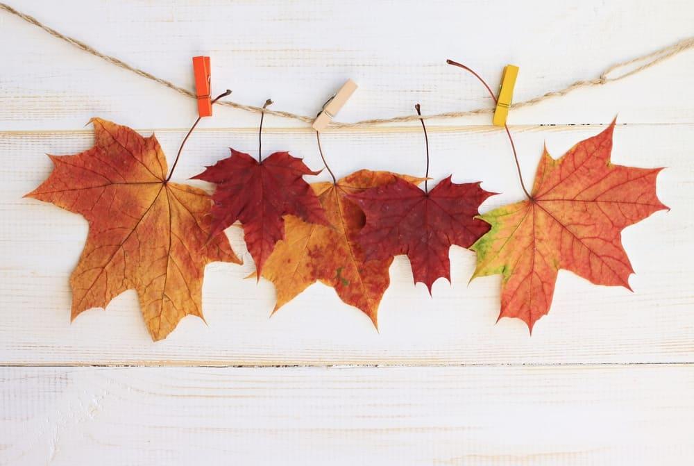 10.Leaf Sculpture