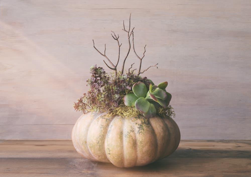 33. Pumpkin growers