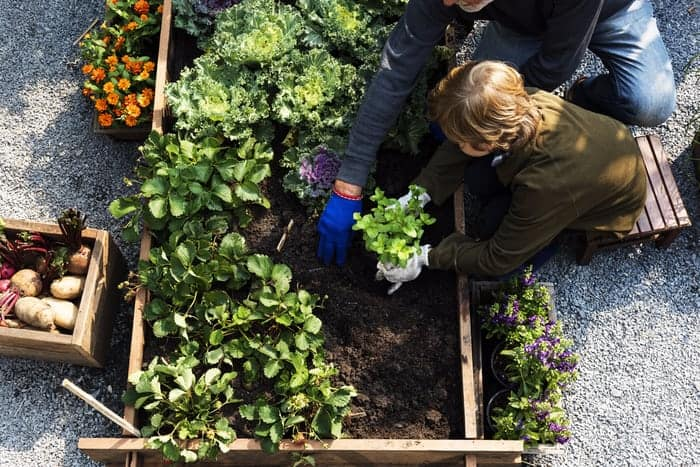 30 Reasons Why Gardening is Good For Health
