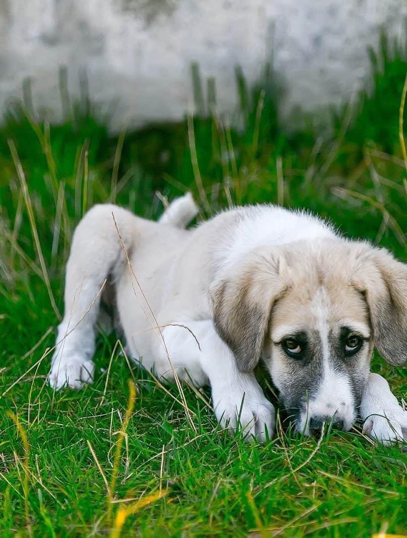 Over 30 Common Items that are Poisonous to Dogs
