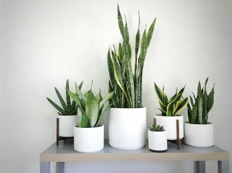 Houseplants That Are Healthy to Keep at Home