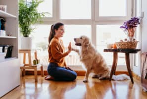 Try These Indoor Activities With Your Pets while Stuck at Home