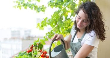 Start a Dreamy Kitchen Garden Today with These Tips