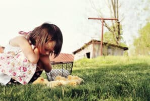 30 Tips For Setting Up a Backyard Chicken Coop