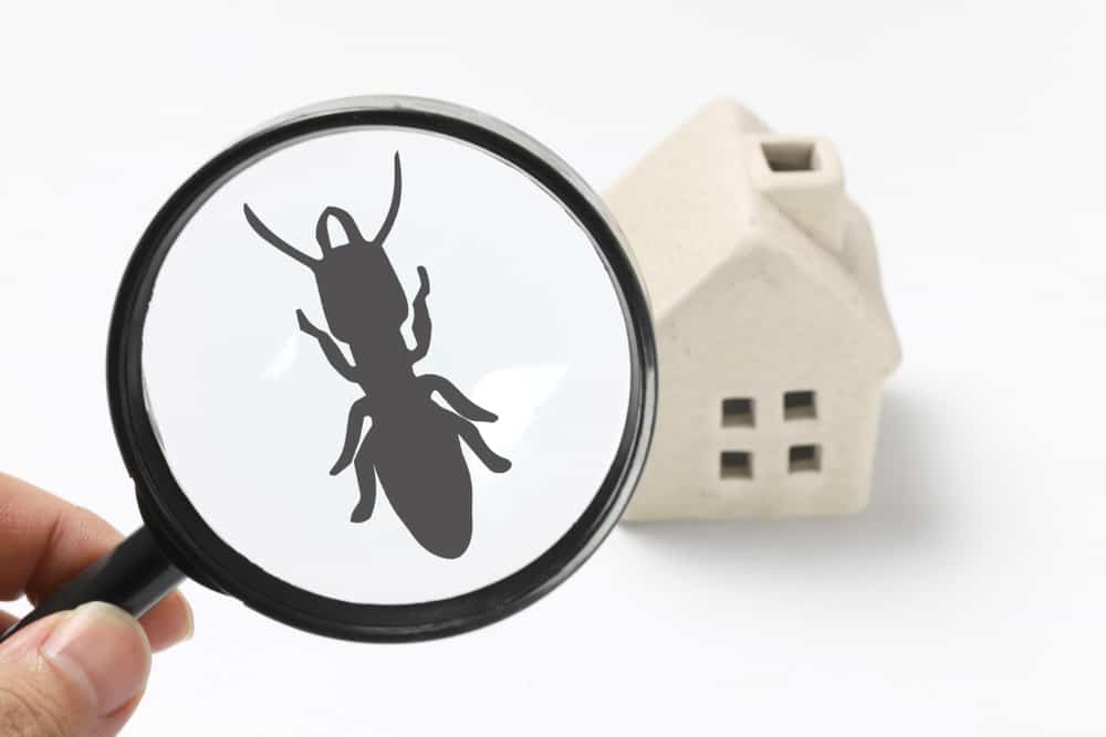 25. Keep an eye out for termites and avoid attempting to be a do-it-yourself exterminator.