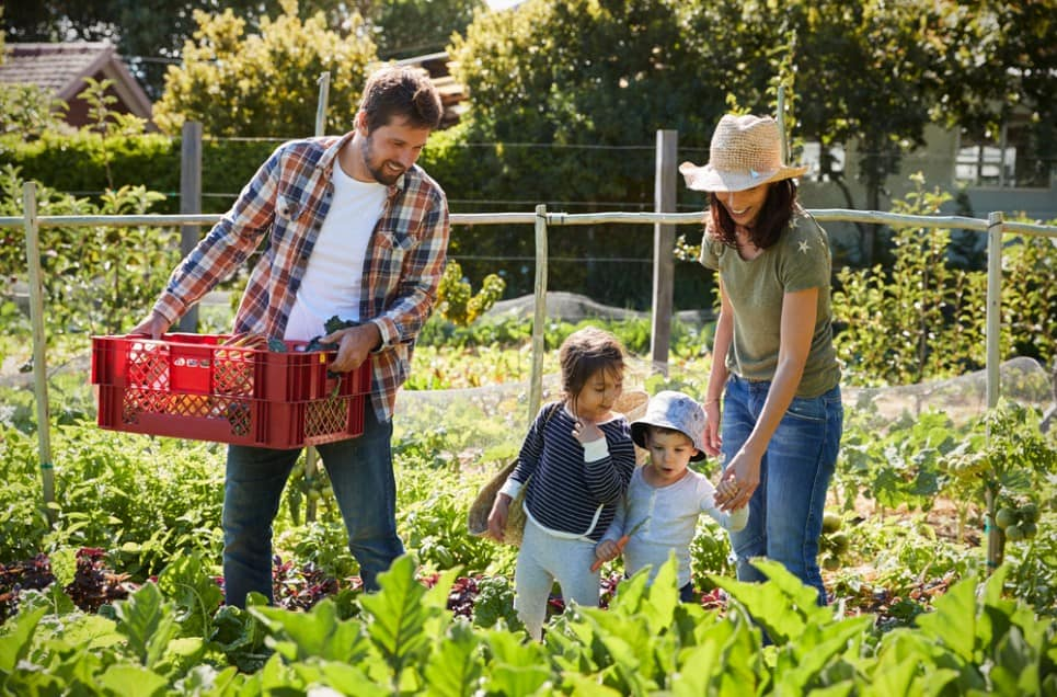 Avoid Huge Mistakes With These Expert Gardening Tips